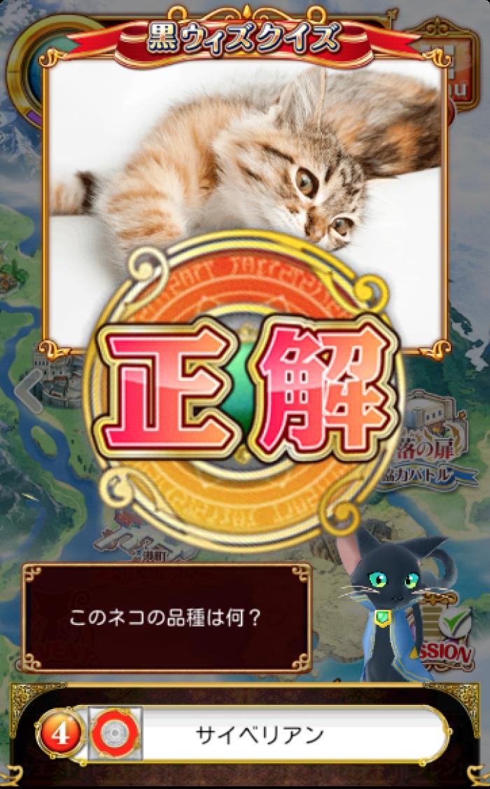 このネコの品種は何?-アビシニアン-マンチカン-オシキャット-サイベリアン-黒ウィズクイズ